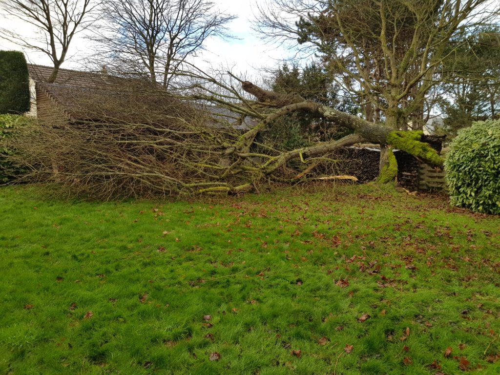 Elagage Ouistreham, Paysagiste à Ouistreham, Jean Marie Desclos évacue les arbres tombés