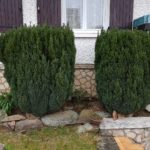 JM Desclos, abattage d'arbustes