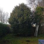 abattage d'un arbre JM Desclos paysagiste Ouistreham