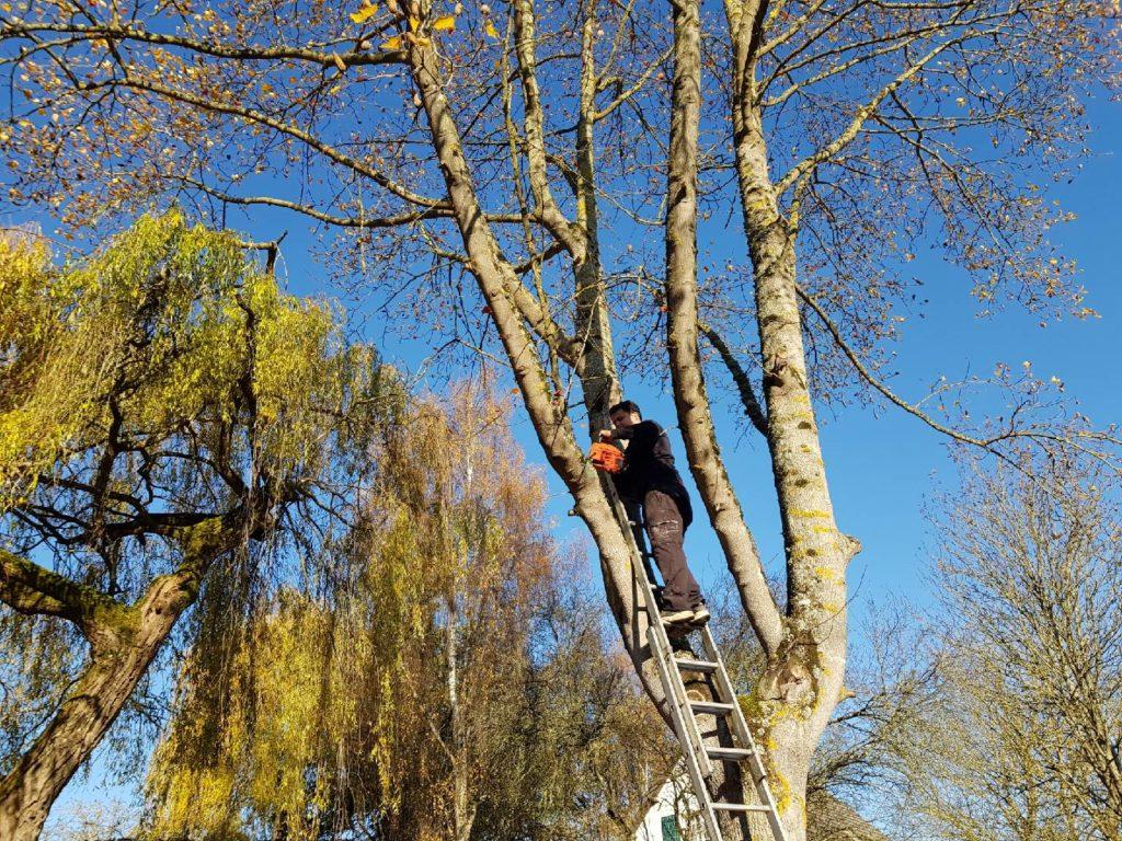 JM Desclos abattage d'arbre à Ouistreham