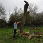 Tronçonnage d'un arbre; JM Desclos paysagiste Ouistreham