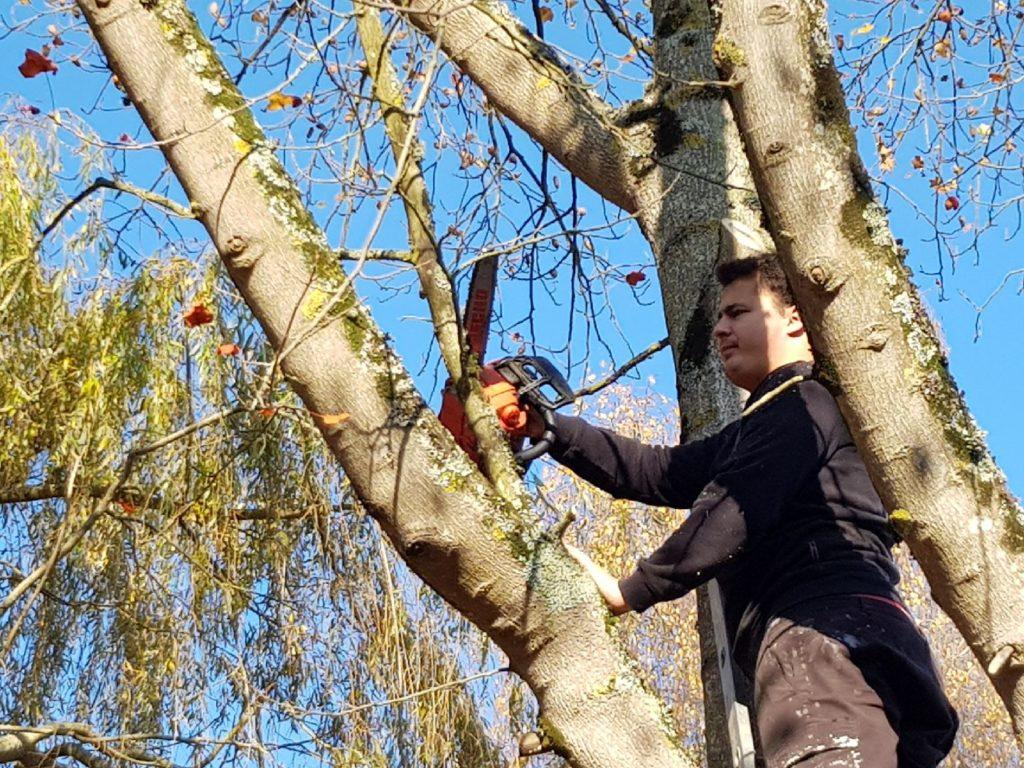 JM Desclos élagage d'un arbre à Bénouville