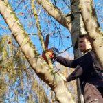 Elagage d'arbre à Douvres la Délivrande JM Desclos (14)