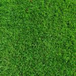 Tonte de pelouse à ouistreham