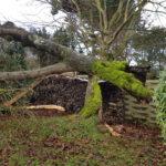 Jean Marie Desclos, paysagiste à Ouistreham, abattage d'arbre