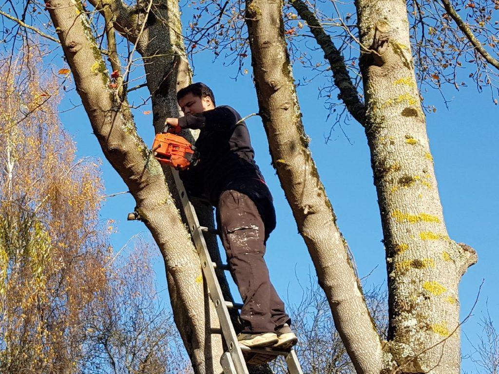 Taille, entretien des arbre à Ouistreham